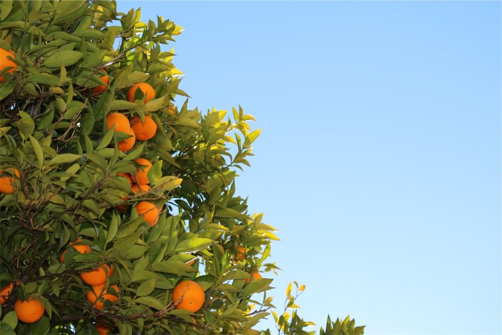 oranges-unsplash