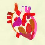 Heart A History